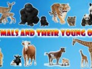 ANIMALS NAMES AND THEIR YOUNG ONES