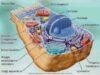 Cytology 1
